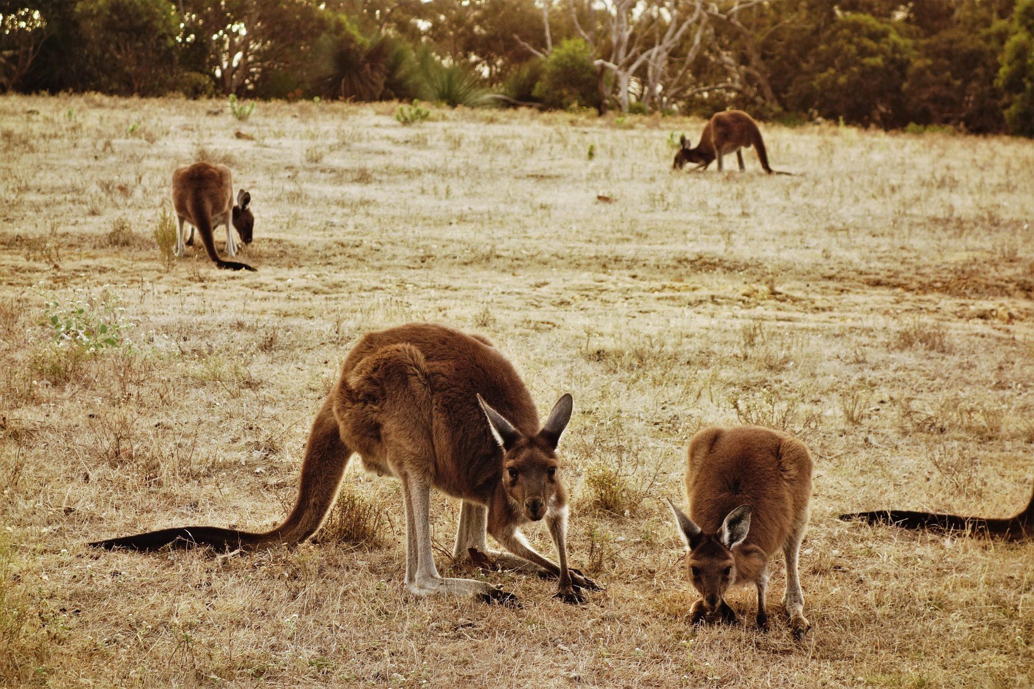 Jak zwiedzać Australię
